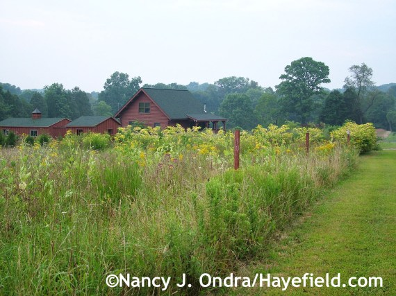 The meadow at Hayefield.com