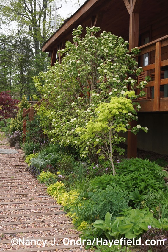 Side Garden Foundation Planting at Hayefield.com