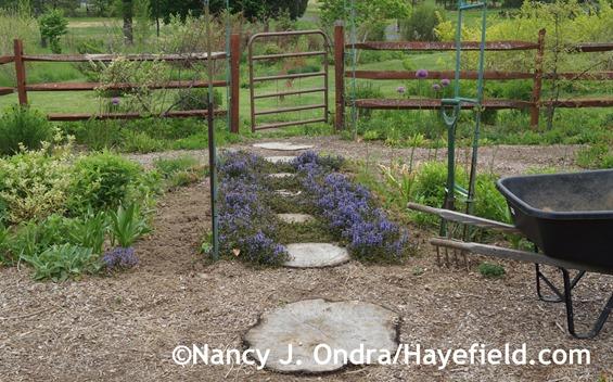 Side Garden Path Minus Stipa at Hayefield.com