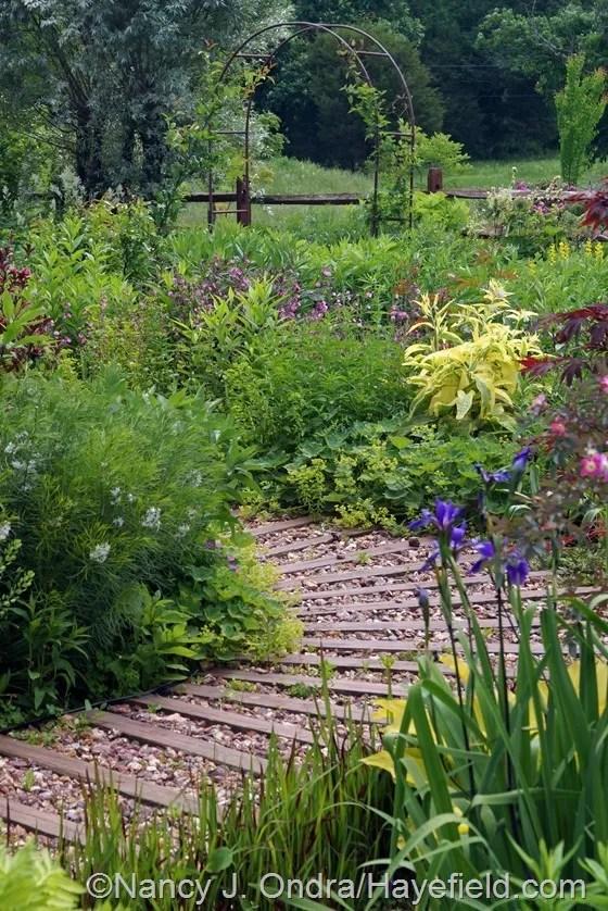 Side Garden mid-June 2014 at Hayefield.com