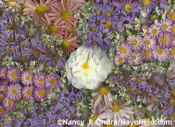 Autumn Composites at Hayefield.com