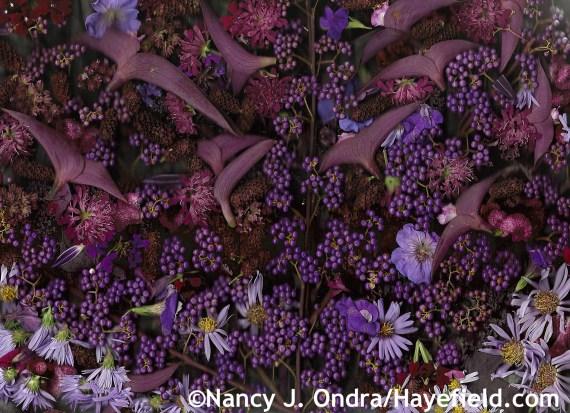 Autumn Purples at Hayefield.com