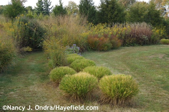 Arc Borders in October at Hayefield.com