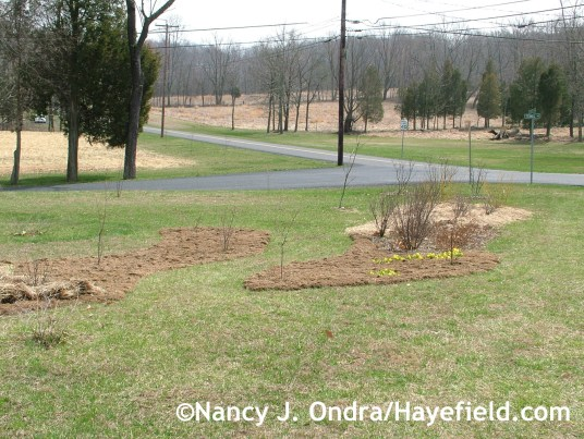Beds built with sod in Shrubbery April 2008 at Hayefield.com