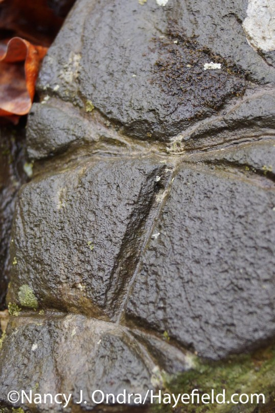 Etched hornfels - Milford Township, PA