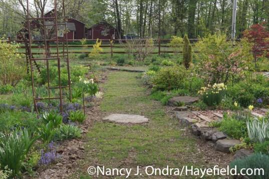 Grass Path in Side Garden at Hayefield.com