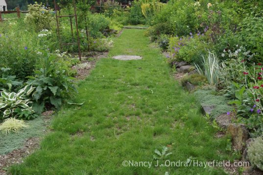 Side Garden Middle Path at Hayefield; Nancy J. Ondra