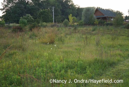 Meadow in September; Nancy J. Ondra at Hayefield