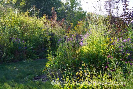 Front Garden in late afternoon light; Nancy J. Ondra at Hayefield