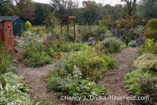 Happy Garden and back path in mid-October; Nancy J. Ondra at Hayefield