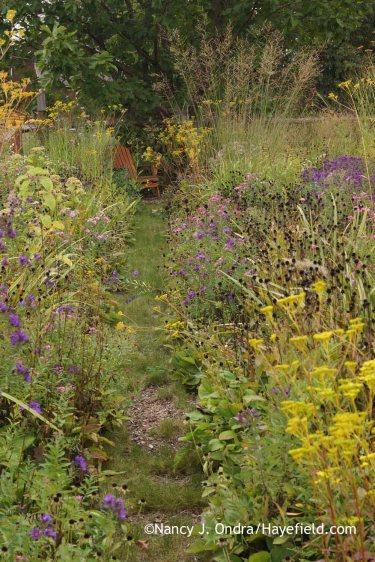 Aster Path October 2015; Nancy J. Ondra at Hayefield
