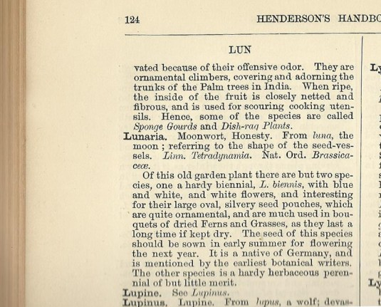 Lunaria entry in Henderson's Handbook of Plants, 1881