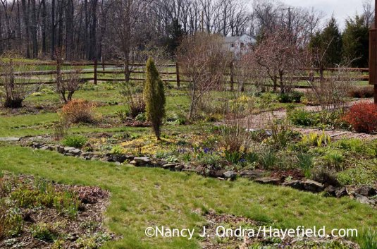 Front Garden - April 14, 2016; Nancy J. Ondra at Hayefield