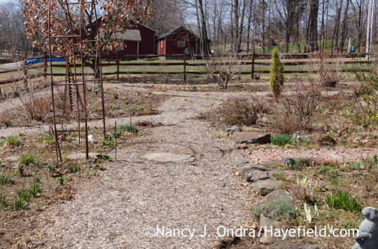 Side Garden - April 13, 2015; Nancy J. Ondra at Hayefield