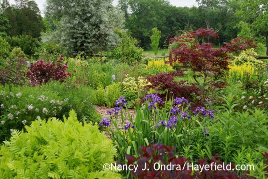 Almost the same view of the side garden as above, but looking quite different on a cloudy afternoon [Nancy J. Ondra at Hayefield]