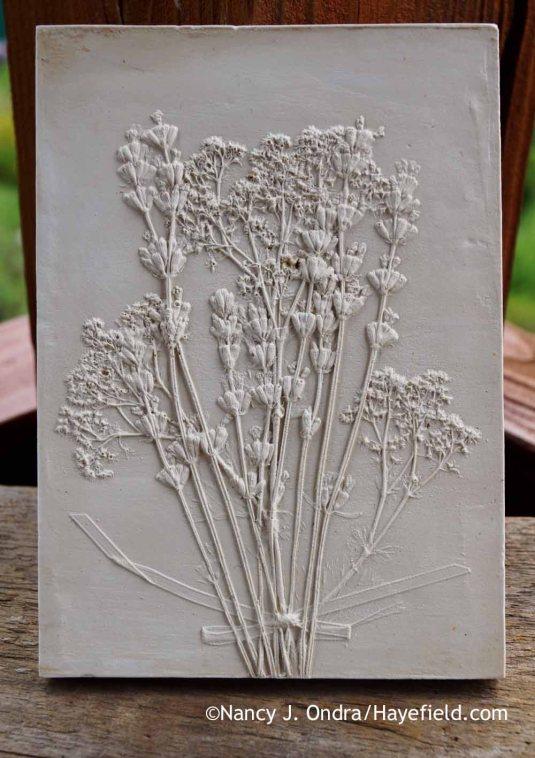 Lady's mantle (Alchemilla mollis) and lavender (Lavandula) botanical casting [Nancy J. Ondra at Hayefield]