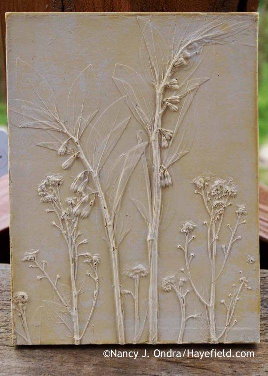 Solomon's seal (Polygonatum commutatum) and forget-me-not (Myosotis sylvatica) botanical casting [Nancy J. Ondra at Hayefield]