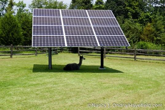 Duncan under the solar panels at Hayefield [Nancy J. Ondra]