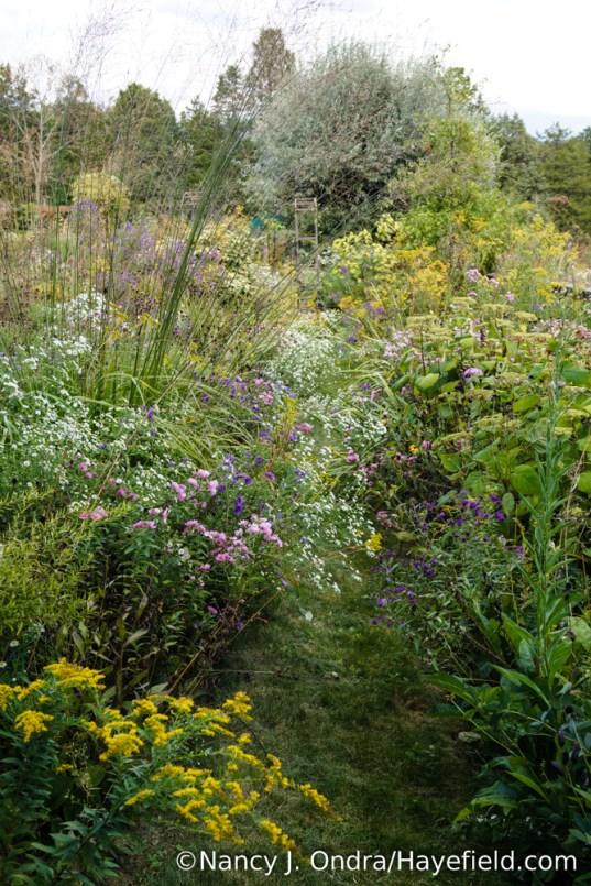 The Aster Path at Hayefield [Nancy J. Ondra/Hayefield.com]