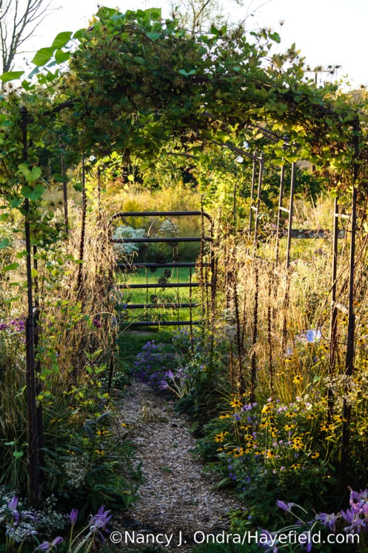 Side Garden Path at Hayefield [Nancy J. Ondra/Hayefield.com]