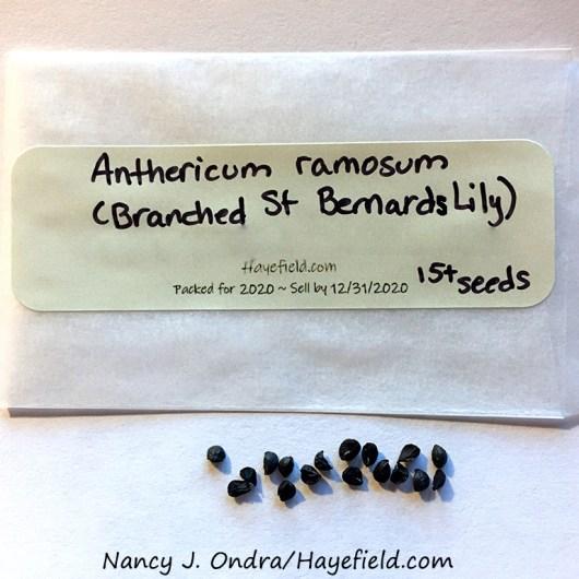 Branched St Bernard's lily (Anthericum ramosum) [Nancy J. Ondra/Hayefield.com]