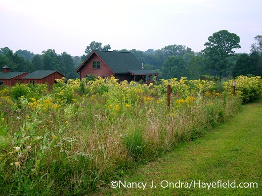 Hayefield in Bucks County, Pennsylvania--the source of all seeds I sell at Hayefield on Etsy