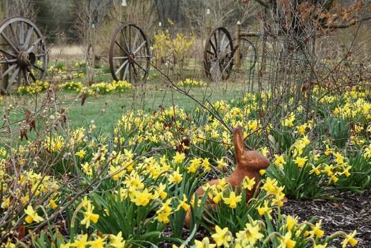 Narcissus 'Tete a Tete' at Hayefield [©Nancy J. Ondra/Hayefield.com]