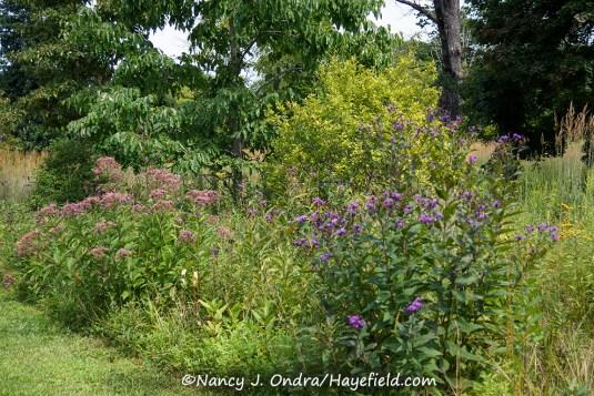 Hayefield Lower Meadow