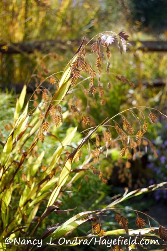 Chasmanthium latifolium [Nancy J. Ondra/Hayefield.com]