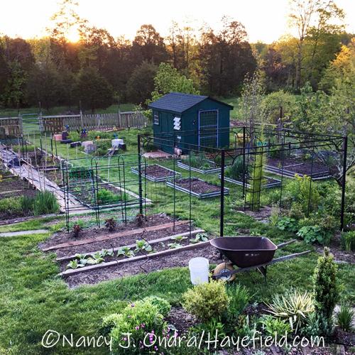 The Seed Frm at Hayefield [©Nancy J. Ondra/Hayefield.com]