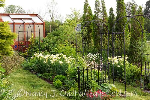 The Happy Garden at Hayefield in early June [Nancy J. Ondra/Hayefield.com]