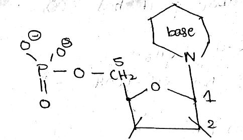 In both DNA and RNA, heterocyclic base and phospha toppr.com