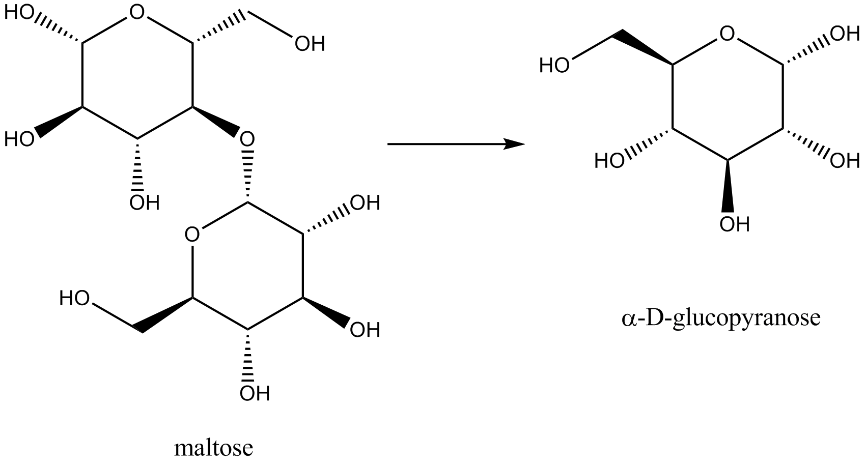 What are the products of hydrolysis of maltose? toppr.com