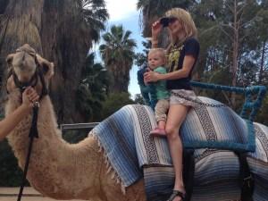 camel9