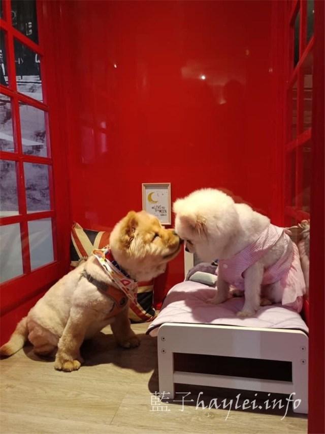 台中北區/英倫王子寵物旅館-全國唯一英倫情境式寵物日托住宿旅館,專業照護師全天候看顧,寬敞舒適的英倫風空間,讓毛孩開心渡假、自在玩耍~台中寵物旅館推薦/寵物旅館/寵物安親班/寵物日托/寵物安親/寵物住宿/寵物美容spa/毛爸媽狗聚英式下午茶/狗聚/寵物攝影/英倫風/場地租借/藍子愛生活 國內外住宿相關 國內旅遊 攝影 民生資訊分享 飲食集錦