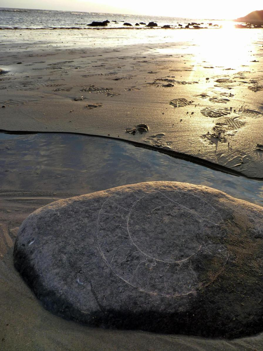 Ammonites litter the beaches at Lyme Regis, UK
