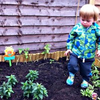 A Toddler Garden - Phase 2