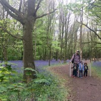 Bluebells and Tudors At Speke Hall