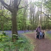 Bluebells and Tudors At Speke Hall
