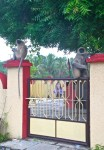 monkeys guard a temple