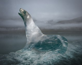 Seal by Hayley Roberts