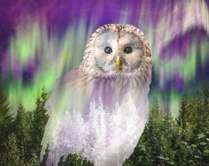 Owl by Hayley Roberts