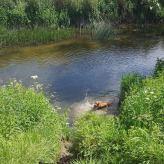 Honey swimming