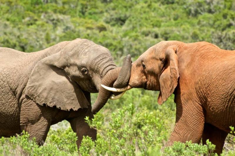 Elephants South Africa Road Trip Travel Blogger Writing Workshops