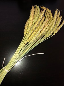 2019 Willow Creek Wheat