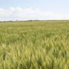 featuring jefferson wheat