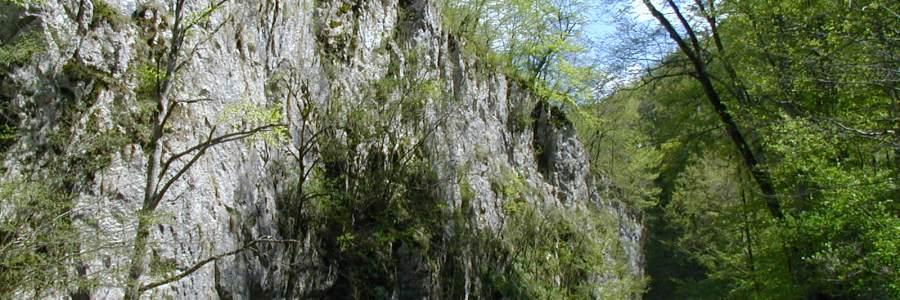 Vargyas-szoros Természetvédelmi Terület