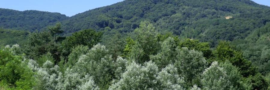 Medvesalja – Hazajáró Túra: Mogyoróskúti Feredő – Dobogó
