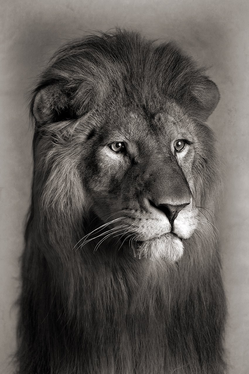 Ghana a Dutch lion