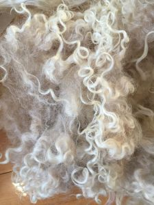 Long, slightly curly lightly creamy white Icelandic fleece. Free of foreign matter.